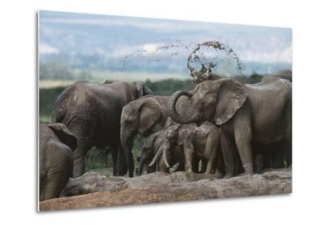 South Africa, Addo Elephant National Park, Elephant in the Mud at Water Hole-Paul Souders-Metal Print