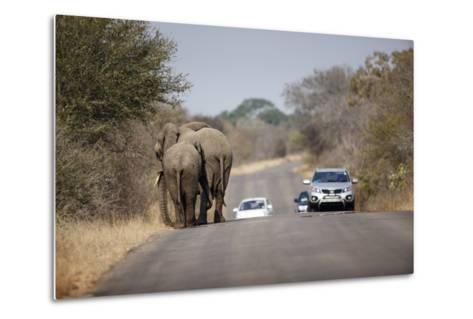 Elephants and Tourist Vehicles, South Africa-Richard Du Toit-Metal Print