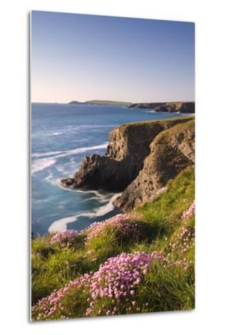 Flowering Sea Thrift (Armeria Maritima) on the Cornish Clifftops Near Porthcothan, Cornwall-Adam Burton-Metal Print