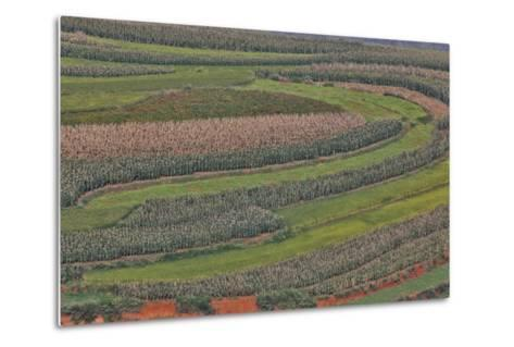 Canola and Corn Crop,Kunming Dongchuan Red Land, China-Darrell Gulin-Metal Print