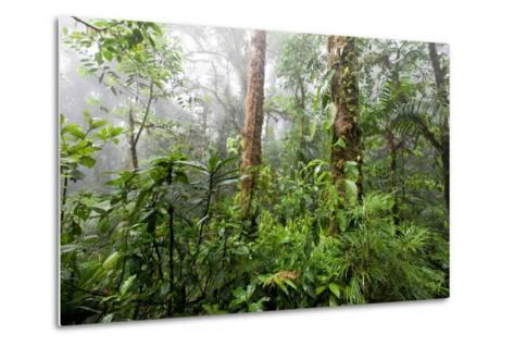 Monteverde Cloud Forest Reserve, Costa Rica-Susan Degginger-Metal Print