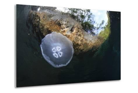 Jellyfish below the Surface-Bernard Radvaner-Metal Print