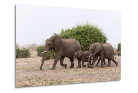 African Elephants and Calf-Sergio Pitamitz-Metal Print