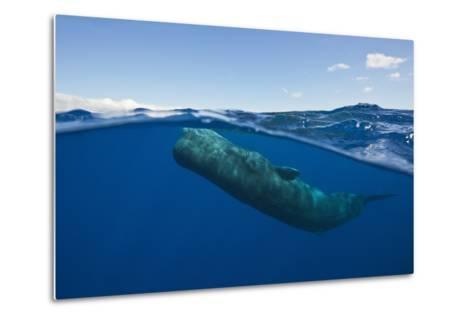 Sperm Whale (Physeter Macrocephalus)-Reinhard Dirscherl-Metal Print