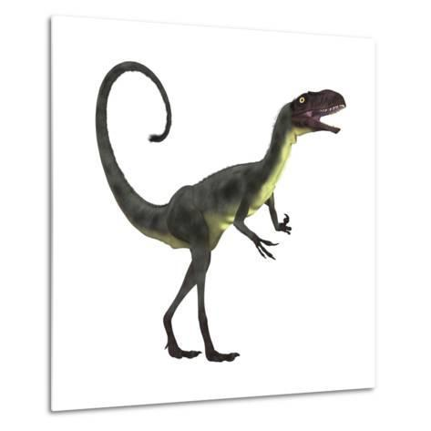 Dilong Dinosaur-Stocktrek Images-Metal Print