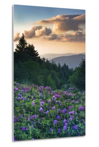 USA, North Carolina. Catawba Rhododendrons in Mountains-Jaynes Gallery-Metal Print