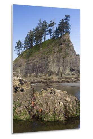 Washington, Olympic National Park, Second Beach, Ochre Sea Stars and Seastack-Jamie And Judy Wild-Metal Print