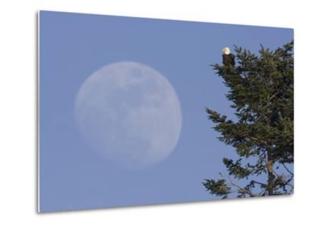 Bald Eagle, Rising Full Moon-Ken Archer-Metal Print