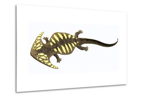 Diplocaulus Amphibian from the Prehistoric Era-Stocktrek Images-Metal Print