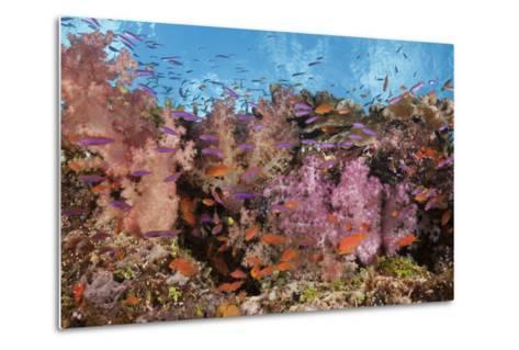 Colorful Fiji Coral Reef-Reinhard Dirscherl-Metal Print