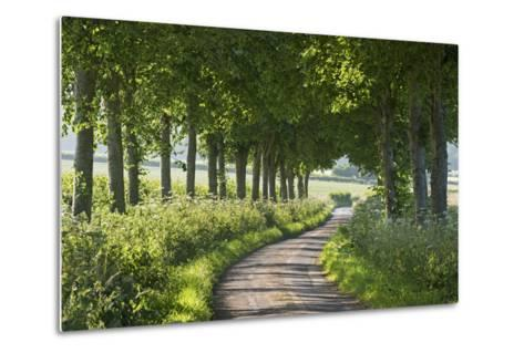 Winding Tree Lined Country Lane, Dorset, England. Summer (July)-Adam Burton-Metal Print