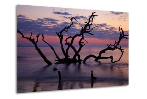 USA, Georgia, Jekyll Island, Driftwood Beach at Sunrise-Joanne Wells-Metal Print