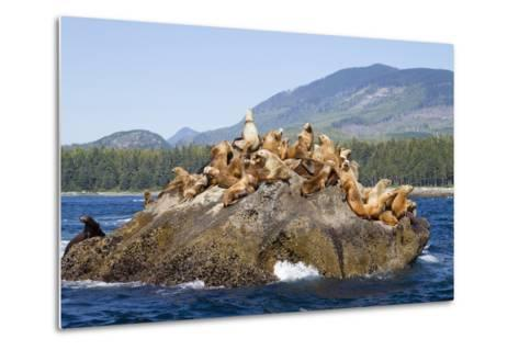 Canada, Pacific Rim National Park Reserve, West Coast Trail, Steller Sea Lions-Jamie And Judy Wild-Metal Print