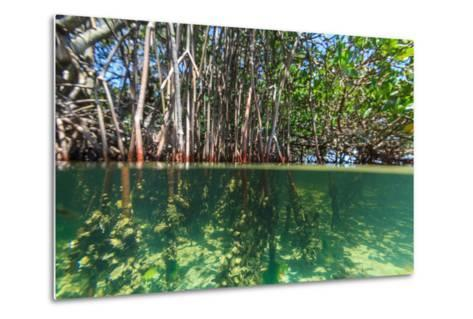Over and under Shot of Mangrove Roots in Tampa Bay, Florida-James White-Metal Print