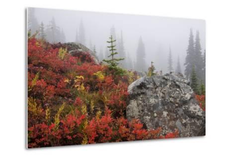 Mount Rainier National Park, Autumn Fog-Ken Archer-Metal Print