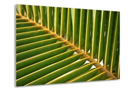 Leaf of a Palm Tree at a Beach on the Caribbean Island of Grenada-Frank May-Metal Print