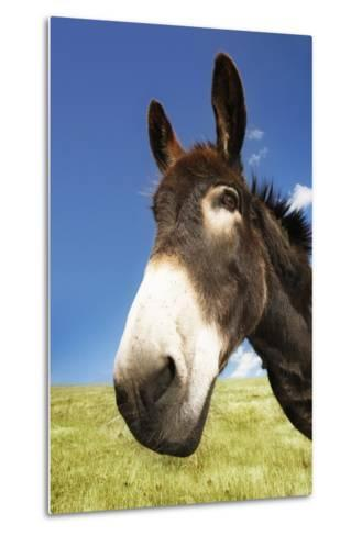 Donkey in Green Field, Close-Up of Head--Metal Print