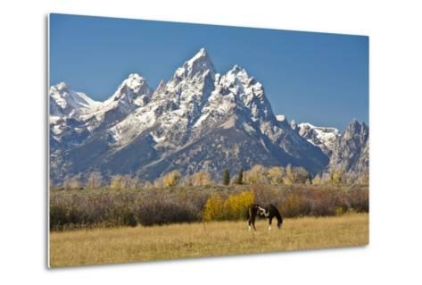 Horse and Grand Tetons, Moose Head Ranch, Grand Teton National Park, Wyoming, USA-Michel Hersen-Metal Print