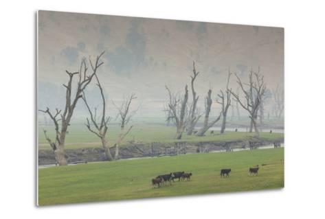 Australia, Victoria, Huon, Lake Hume with Forest Fire Smoke-Walter Bibikow-Metal Print