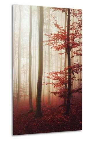 The Way Out-Philippe Sainte-Laudy-Metal Print
