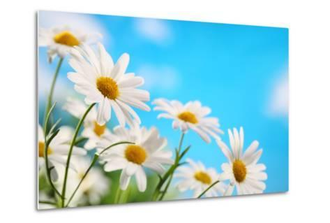Daisy Flower against Blue Sky-Liang Zhang-Metal Print