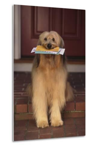 Shaggy Dog Fetching the Mail-DLILLC-Metal Print