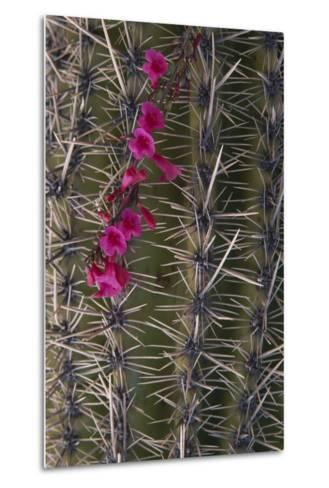 Flowers on Cactus-DLILLC-Metal Print