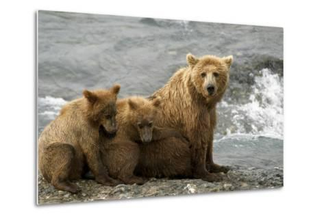 Mother Grizzly with 2nd Year Cubs by River Sw Ak Summer Mcneil State Game Sanctuary-Design Pics Inc-Metal Print