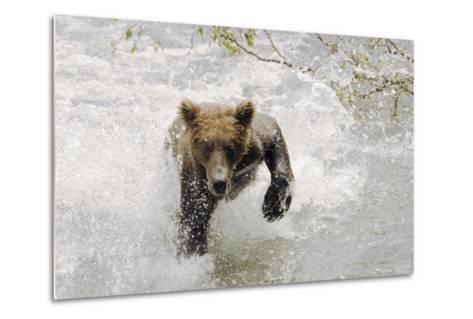 Brown Bear Charging Through Water Brooks River Katmai National Park Southwest Alaska Summer-Design Pics Inc-Metal Print