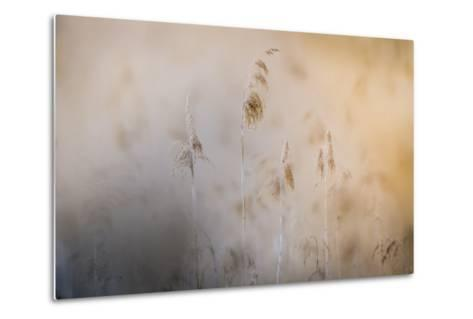 Close View of Grasses, Gap, France-Keith Ladzinski-Metal Print