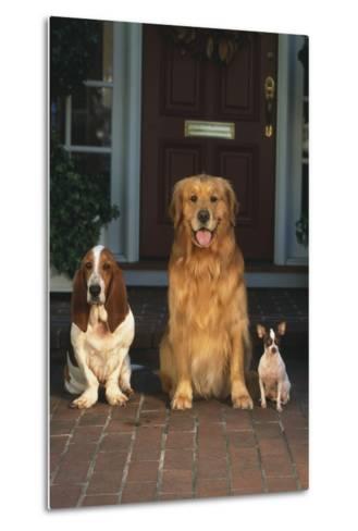Three Dogs on Porch-DLILLC-Metal Print