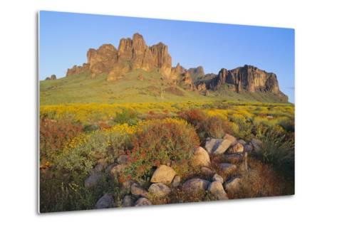 Wildflowers in the Desert-DLILLC-Metal Print