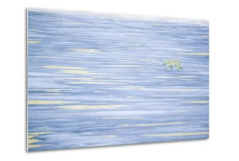 Polar Bear on a Sea of Ice-DLILLC-Metal Print