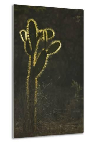 Opuntia Cactus with Spines Outlined by Sunlight-DLILLC-Metal Print