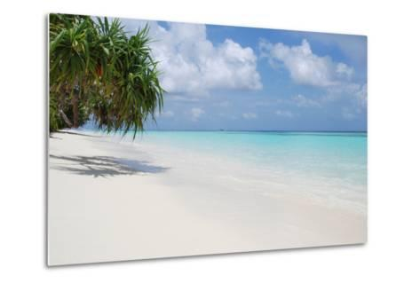 Beach with Palm Trees-Design Pics Inc-Metal Print