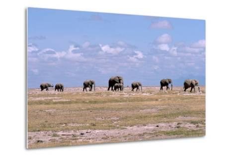 A Herd of Elephants Ambles in Line across the Plains in Amboseli National Park-Shannon Switzer-Metal Print