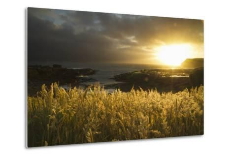Sunlight Glowing at Sunset and Illuminating the Tall Grass at the Water's Edge-Design Pics Inc-Metal Print