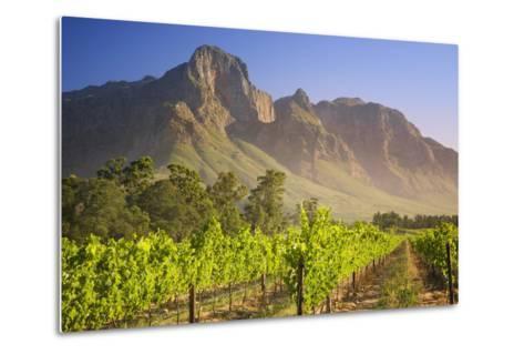 Rows of Grapevines at Vineyard-Jon Hicks-Metal Print