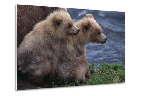 Grizzly Cubs with Mother by River-DLILLC-Metal Print