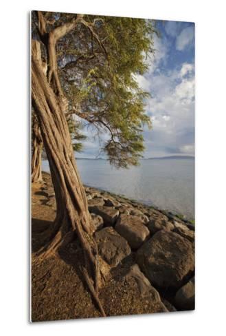 Hawaii, Maui, Kihei, a Kiawe Tree at Sunset-Design Pics Inc-Metal Print