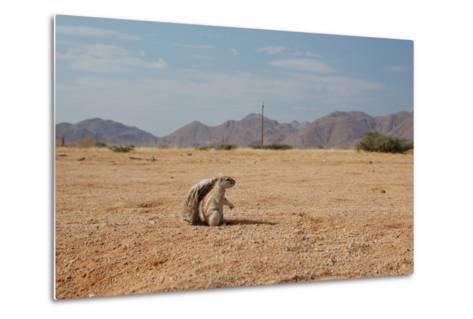A Cape Ground Squirrel, Xerus Inures, on the Look Out in Solitaire, Namibia-Alex Saberi-Metal Print