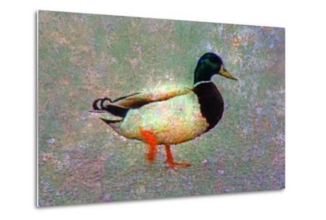 Duck-Andr? Burian-Metal Print