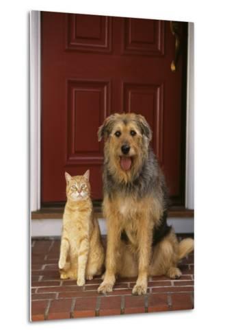 Cat and Dog Waiting in Front of Door-DLILLC-Metal Print