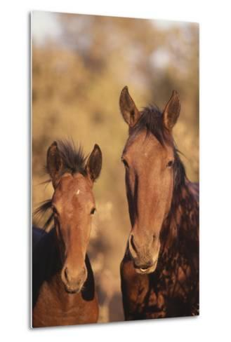 Wild Horse and Colt-DLILLC-Metal Print