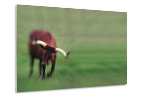 Charging Bull-DLILLC-Metal Print
