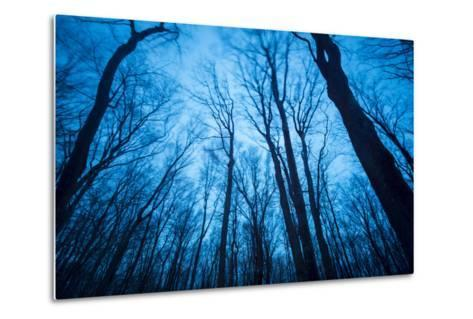 A Grove of Trees in Sleeping Bear Dunes National Lakeshore on the East Side of Lake Michigan-Michael Melford-Metal Print