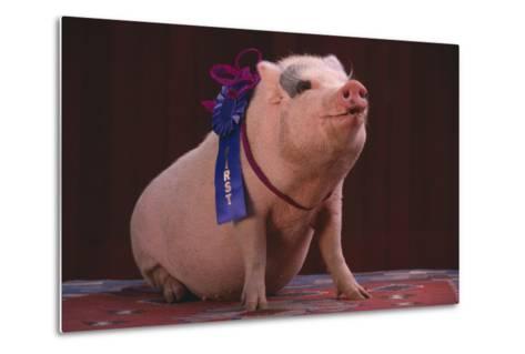 Prize-Winning Pig-DLILLC-Metal Print