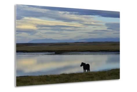 An Icelandic Horse Stands Along the Shore at Low Tide-Raul Touzon-Metal Print