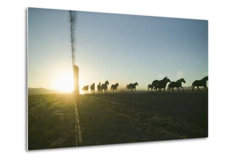 Quarter Horses Running by Fence Line-DLILLC-Metal Print