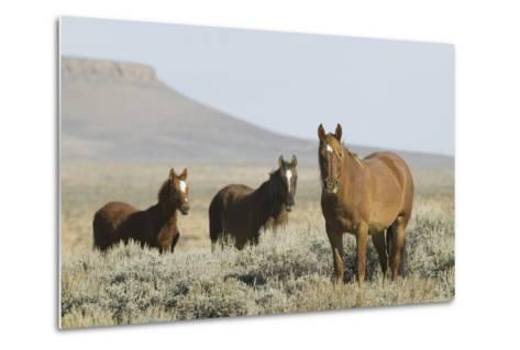 Wild Horses on Prairie-DLILLC-Metal Print